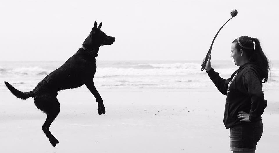 Savvy Dog Training
